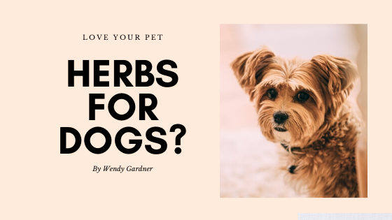 herbs-for-dogs