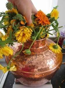 weighing copper pot with calendulal flowers for distilling into hydrosol hydrolat