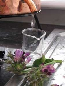comfrey hydrosol droplets