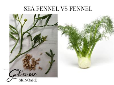 sea fennel vs sweet fennel