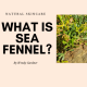 what is sea fennel
